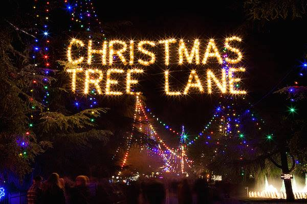 Fresno's Christmas Tree Lane is a tradition going back 95 years. Each  December, North Van Ness Boulevard in Fig Garden becomes a one-way street  lined with ... - Fresno's Christmas Tree Lane - HITZ 1049