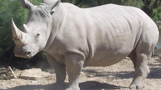 Rhino dating sites