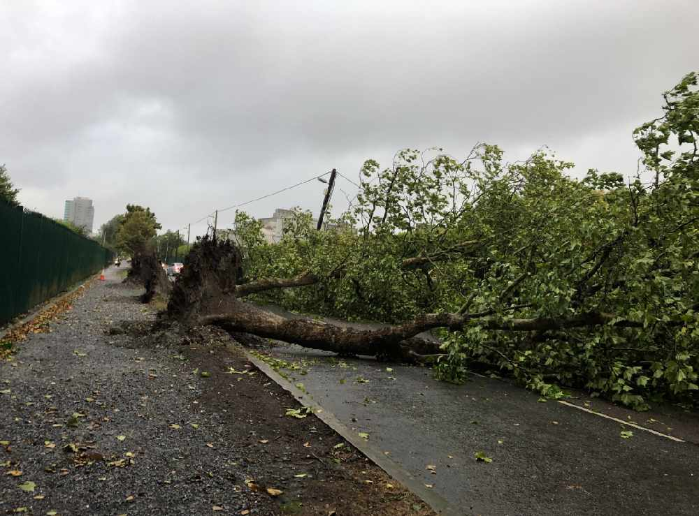 Trees down across Cork as a result Storm Ali