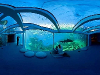 Oman to have an 8,000sqm aquarium by 2018!