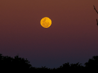 You have a chance to see a 'Super Blue Moon'