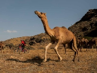 Chasing Camel Trails in Oman!