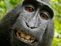 حسم معركة حول سيلفي بين مصور وقرد