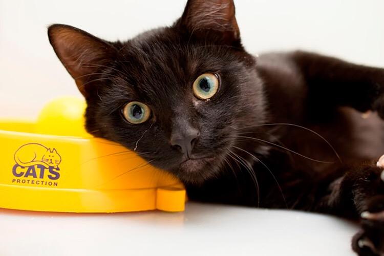 Rescue Cats Halesowen