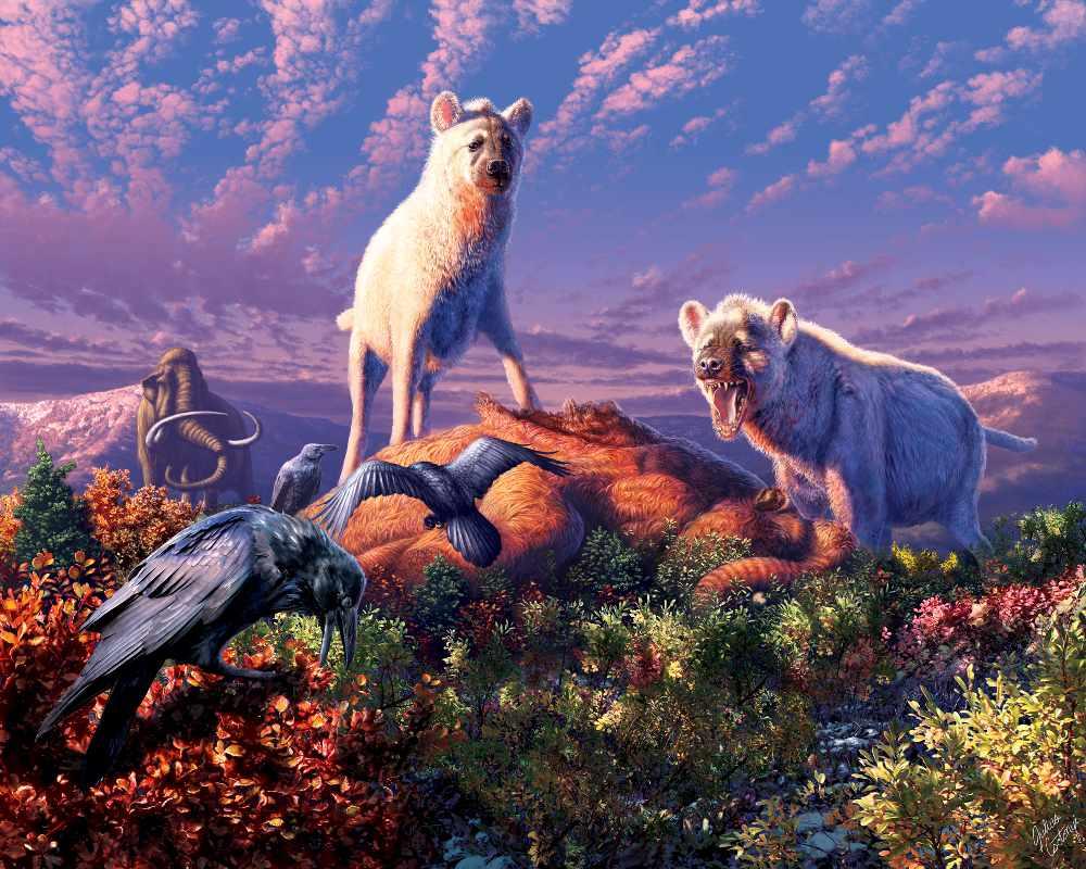 New study shows hyenas roamed Yukon