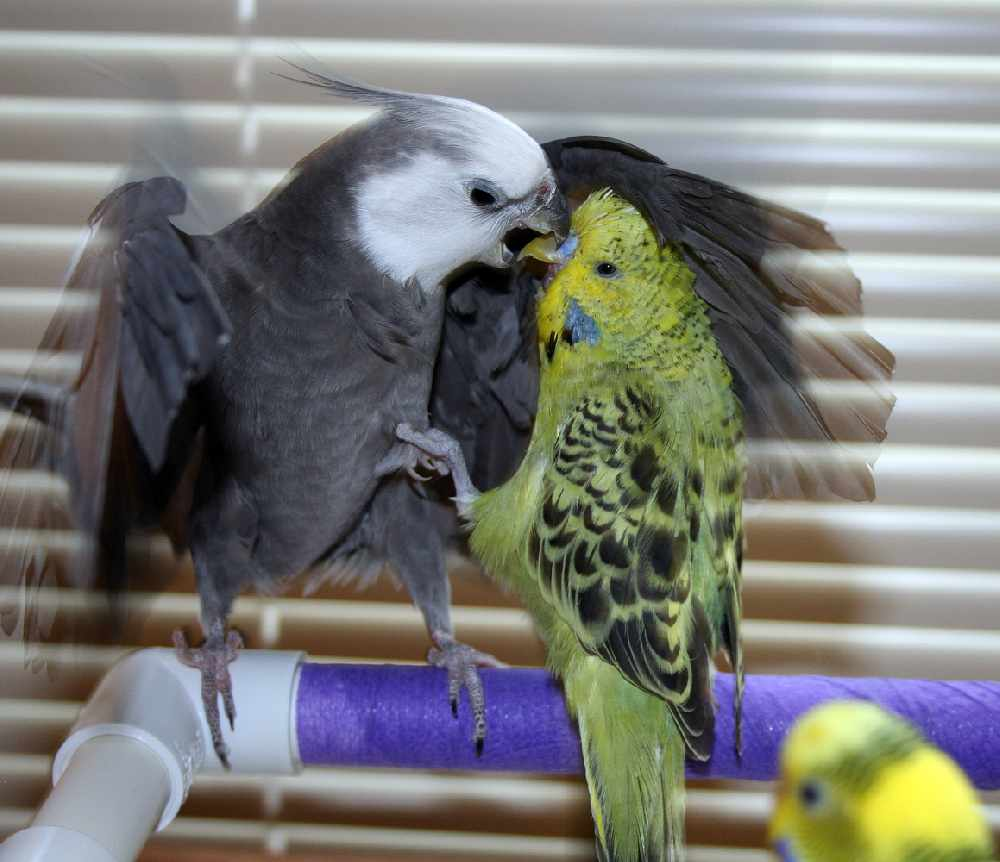 Alaska club hosts adoption events for birds whose owner died - KINY