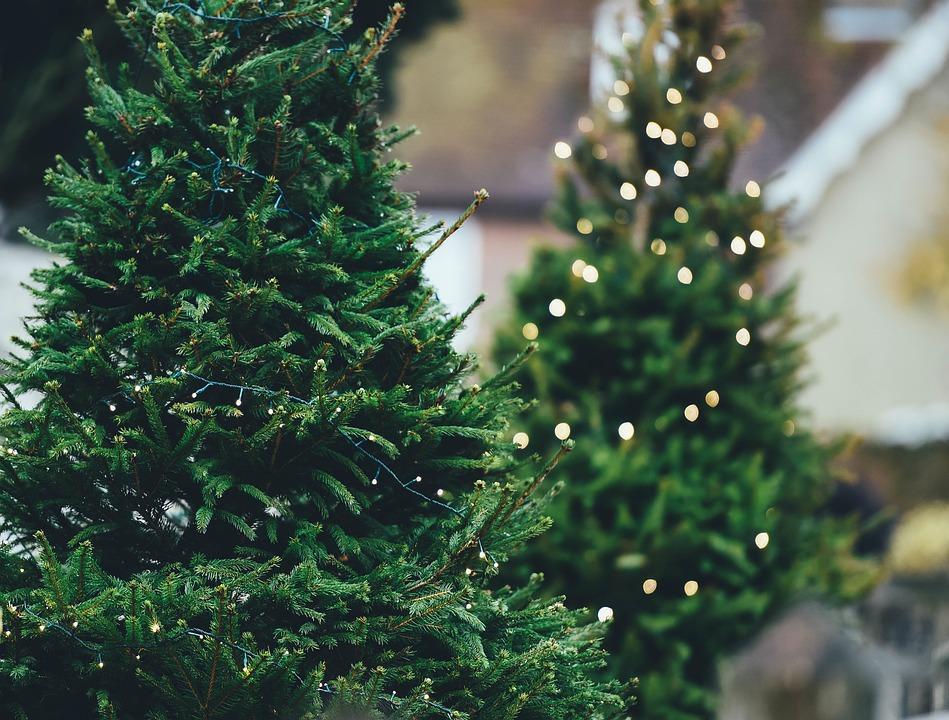 Christmas trees stolen in Castletown