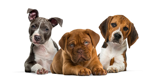 Scammers use cute puppy pics to lure their victims - 97.3 Coast FM 1
