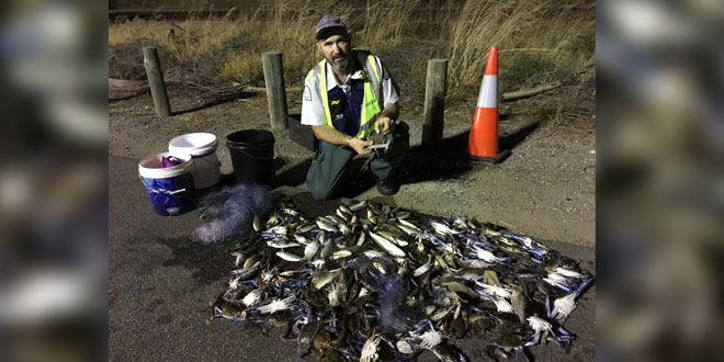 Freeway roadblock uncovers a catch of 115 undersize crabs
