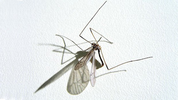 Washoe County Human West Nile Case Most Likely Acquired Locally