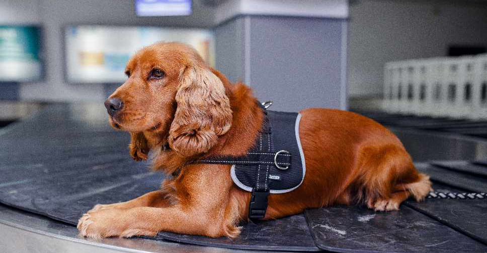 Dubai Customs to test new product for sniffer dogs - Dubai